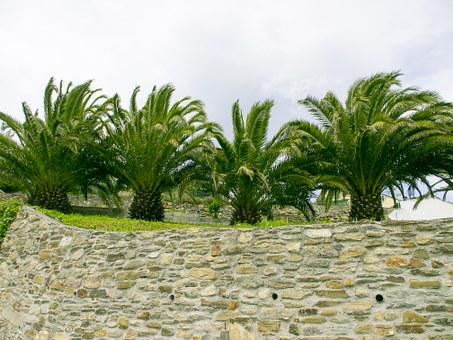 Palms, Garden, Ribadeo Lugo