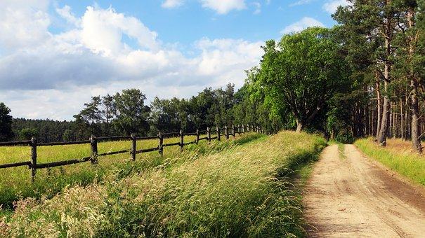Lane, Trail, Cycle Path, Nature, Landscape, Trees