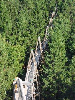 Treetop Walk, Kopfing, Innviertel, Upper Austria