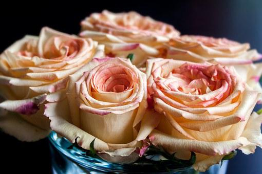 Rose, Nature, Plant, Flower, Green, Blossom, Bloom