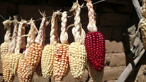 Corn, Dry, Agriculture, Lake Titicaca