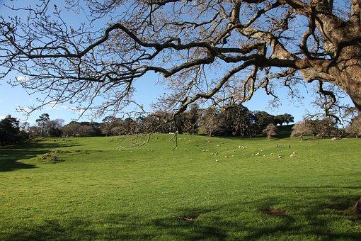 Cornwall Park, Auckland, New Zealand, Landscape