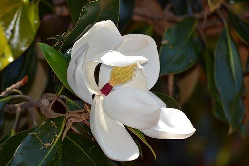 White, Flower, Flowers, Spring, Nature, Plant, Macro