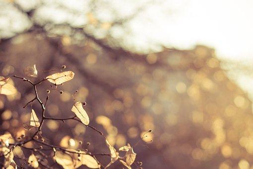 Autumn, Foliage, Seasons, Wood, Garden, Nature