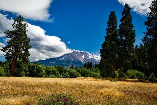 Mount Shasta, California, Mountain, Sky, Forest, Trees