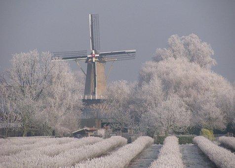 Mill, Winter, Black Berries, Ripe, Winter Landscape