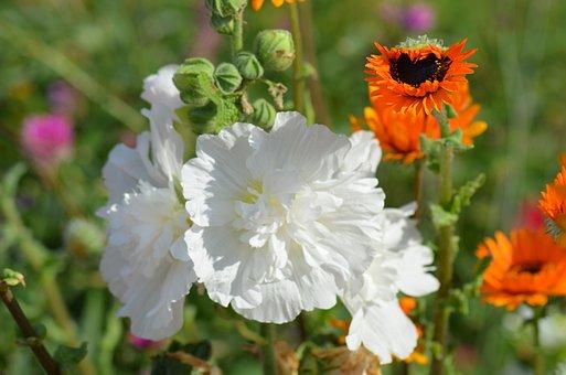 Flower, White Flowers, Nature, Pollen, White
