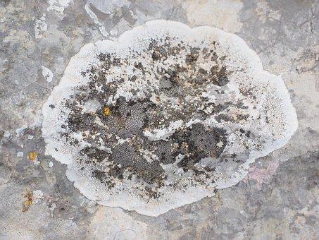 Crust Lichen, Rock, Limestone, Lichen, Lichen Growth