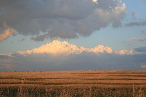 Field, Flat, Outstreched, Deep Ochre, Grass, Glow, Sky