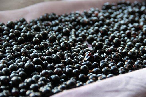 Black Currant, Berry, Tasty, Eat