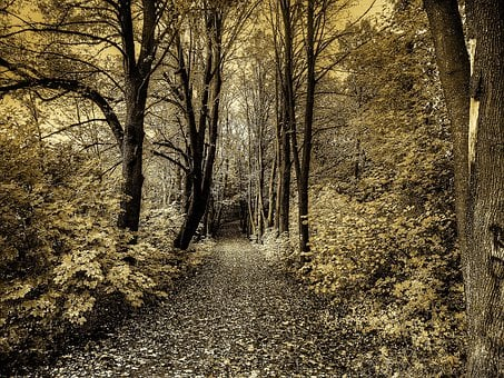 Road, Forest, Trees, Tree, Nature, Seasons, Landscape