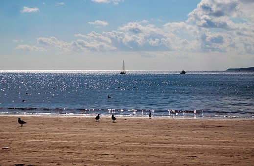 Beach, Sand, Shore, Birds, Seagull, Gulls, Sea, Waves