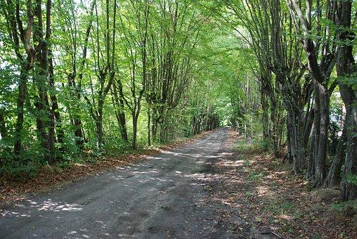 Podlaski, Breakthrough, The Path, Way, Forest