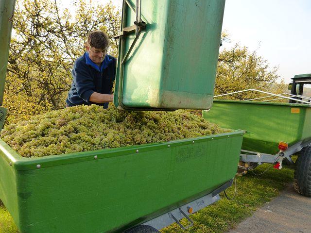 Wine, Vintage, Wine Growers, Winemaker, Harvest, Grapes