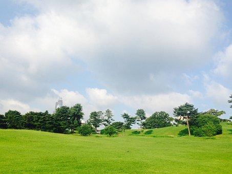 Seoul Olympic Park, Olympic Park, Alone Tree, Wood