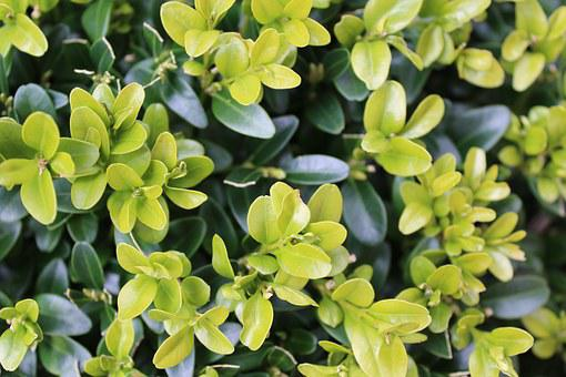 Book, Hedge, Leaves, Garden, Green, Plant, Boxwood