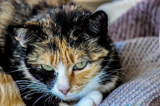 Cat, Feline, Domestic Animals, Animal, Kitten