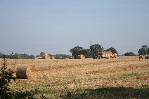 Cassel, Harvest, France, Farming, Normandy, Rural