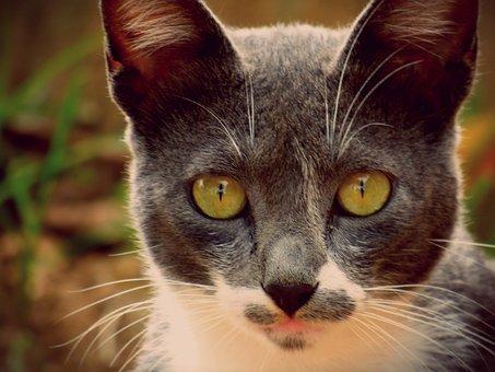 Cat, Cats, Animal, Kitten, Gata, Pet, Feline Stopped
