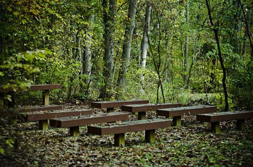 Benches, Trees, Forest, Green, Brown, Mysterious