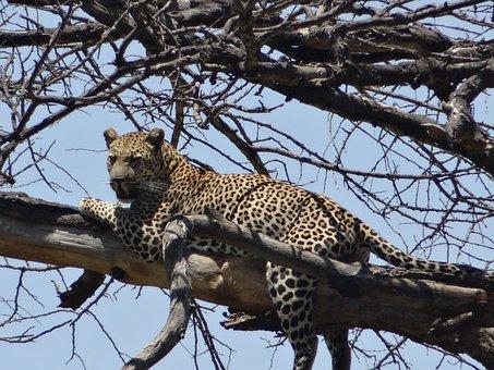 Leopard, Prey, Dead Tree