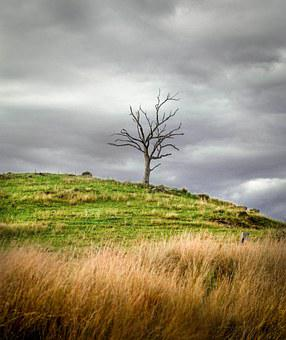 Dead Tree, Hill, Landscape, Lonely, Scenic