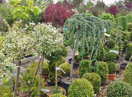 Nursery, Flower Trade, Plant Trade, Botany, Plant