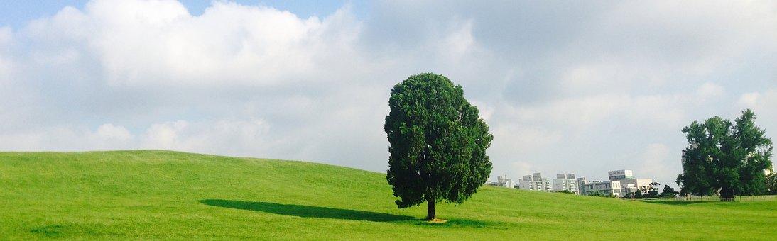 Seoul Olympic Park, Olympic Park, Alone Tree