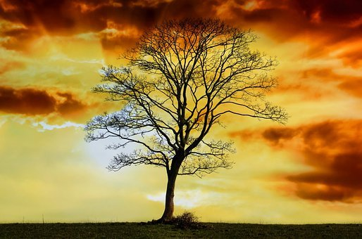 Tree, Branch, Branches, Alone, Sky, Red, Sun, Sunshine
