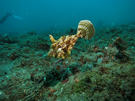 Filefish, Fish, Underwater, Scuba, Reef, Tropical
