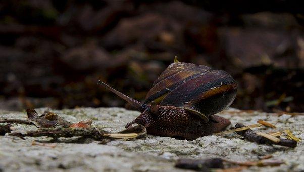 Snail, Nature, Slow, Wildlife, Small, Slug, Natural