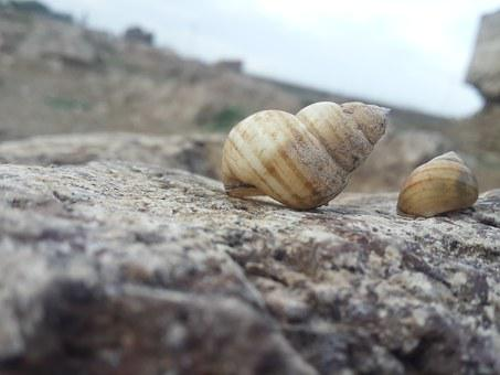Sea, Shell, Two Shell, Nature, Rock, Stone, Sky