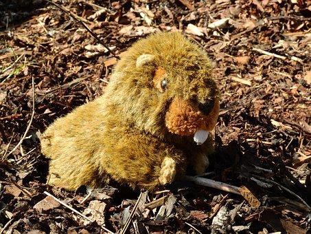 Stuffed Animal, Teddy Bear, Soft Toy, Child