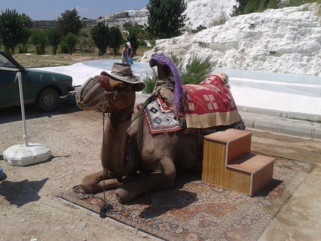 The Camels, Live, Tourist Attraction, Holidays