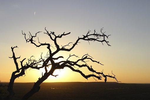 Sunset, Sky, Horizon, Tree, Sun, Branches, Setting Sun