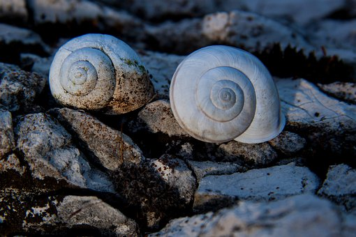 Snails, Snail Shells, Rock, Marble, Weathered, Stone