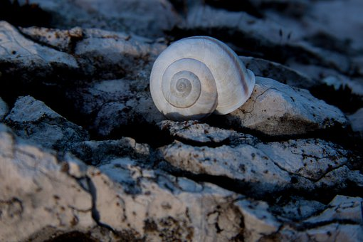 Snail, Shell, Rock, Marble, Weathered, Stone