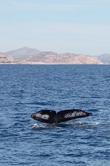 Whale, Sea, Beach