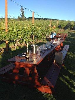 Winery, Summer, Dine, Picnic, Wine, Vineyard