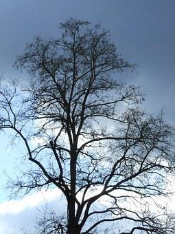 Winterlicher Tree, Tree Without Leaves, Atmosphere