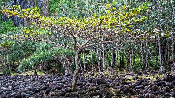 Tree, Reunion Island, Cold Lava, Landscape