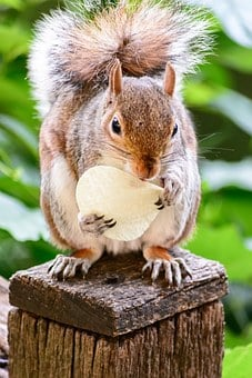 Squirrel, Rodent, Eating, Nature, Animal, Cute