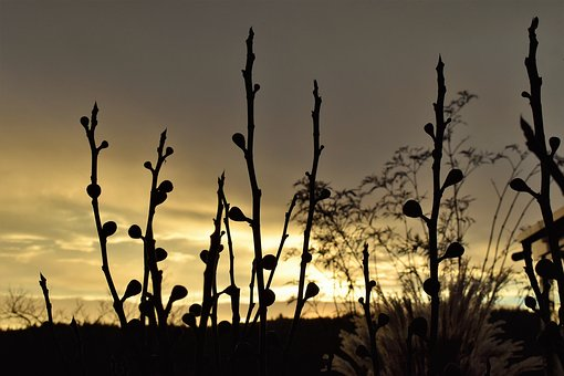 Morgenrot, Morgenstimmung, Grasses, Dried Plants