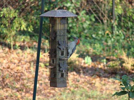 Woodpecker, Feeding, Birdhouse, Animal, Bird, Feeder