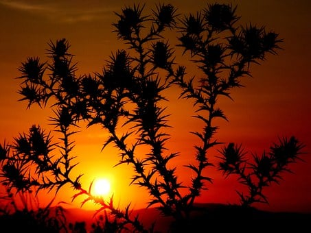Sunset, Spin, Plant, Sun, Sky, Red, Orange, Fire