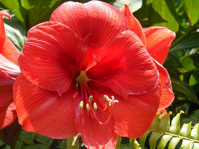 Flowers, Exotic Garden, Reunion Island