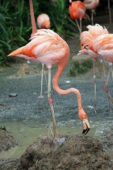 Flamingo, Food, Flamingos, Flock, Bird, Fly, Wings