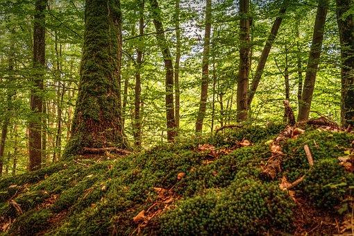 Forest, Tree, Moss, Green, Nature, Idyll, Rest