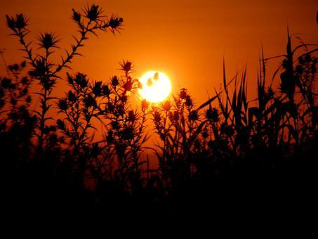 Sunset, Sun, Plants, Spin, Sky, Red, Cane, Orange, Fire