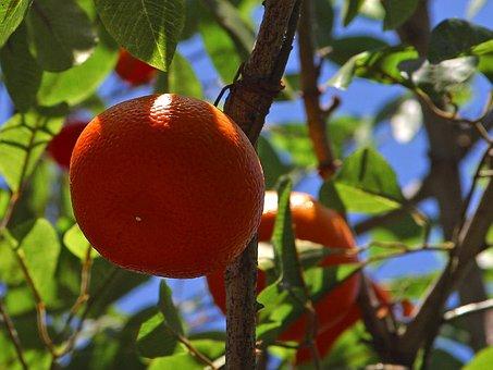 Tangerines, Mandarin Tree, Mandarin, Orange Tree, Fruit